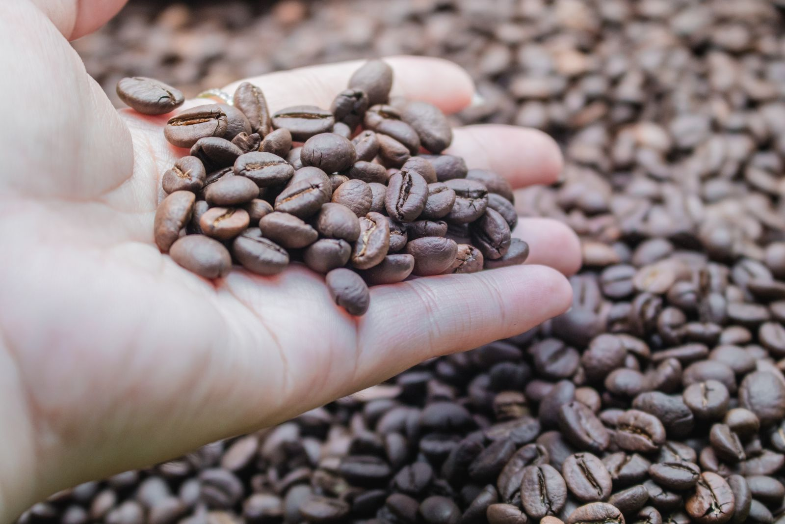 Cách nhận biết cà phê